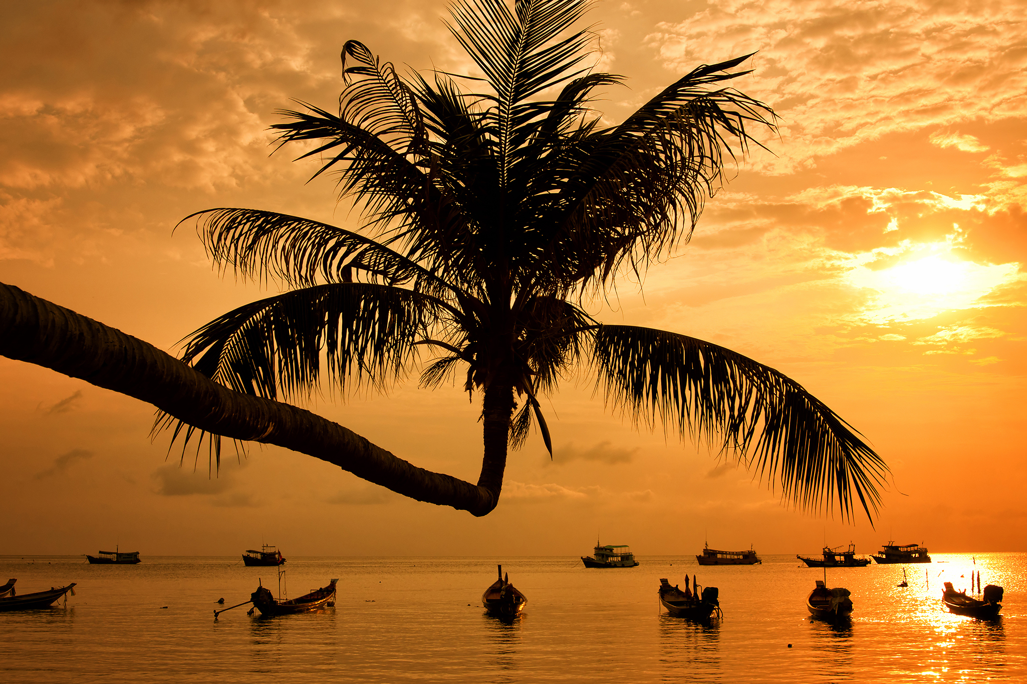 Palm tree and boats moored in the sea at sunset