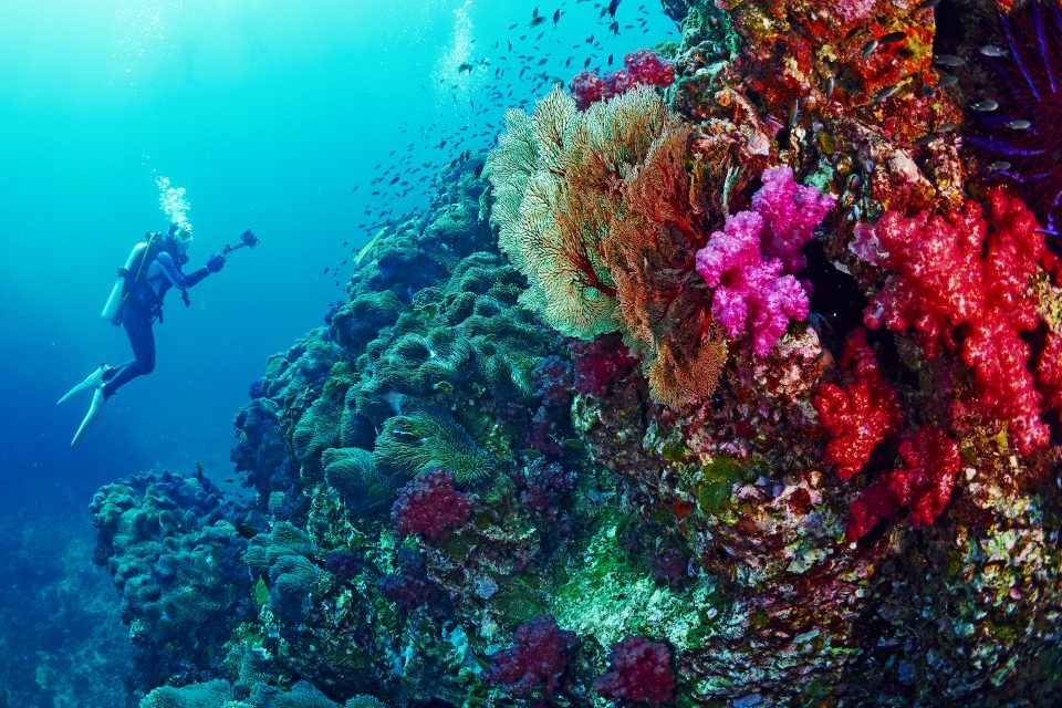 Diver and coral reef, Thailand