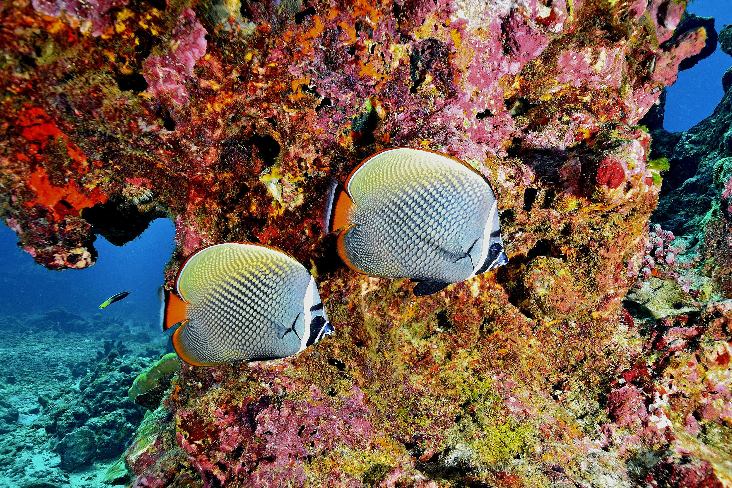 Fish and coral at the Similan Islands, Thailand