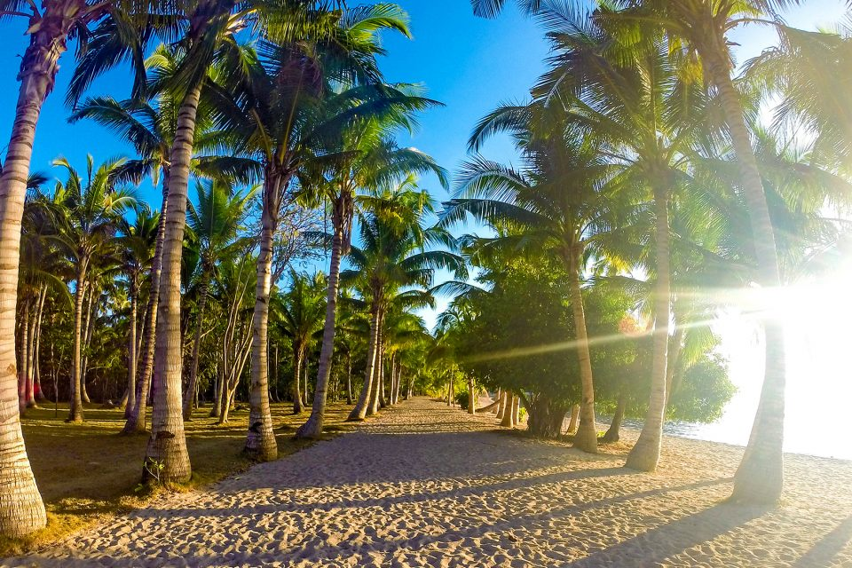 A beach lined with palm trees