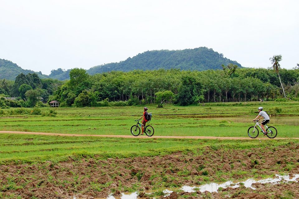Two men cycling through rice fields