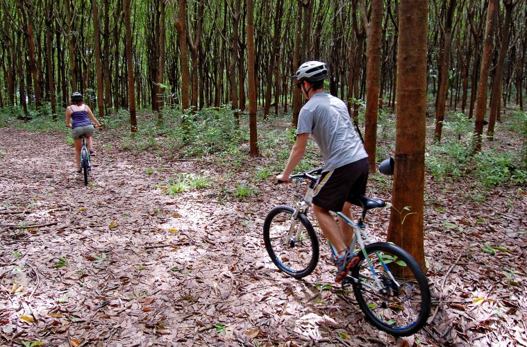 A couple cycling through the forest