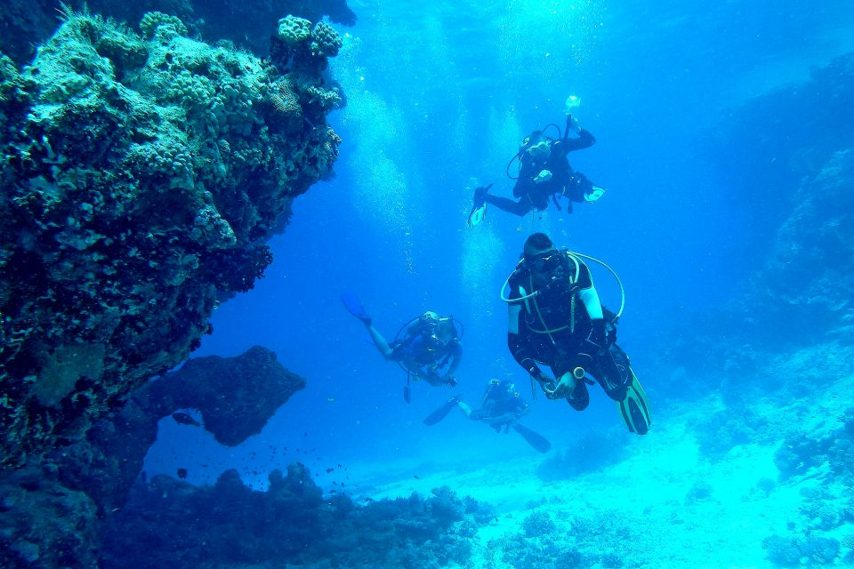 A group of divers in clear blue waters