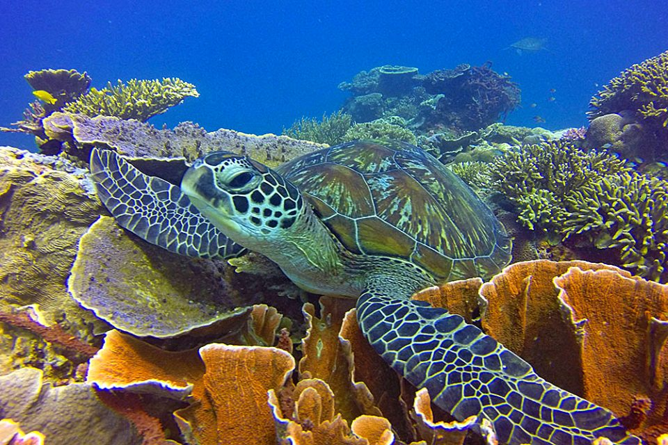 A turtle swimming through a tropical reef