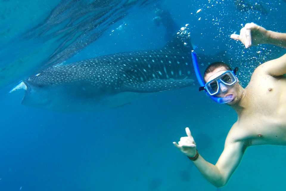 A male snorkeler posing next to a whale shark