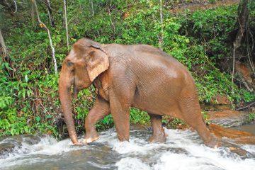 karen experience elephant nature park
