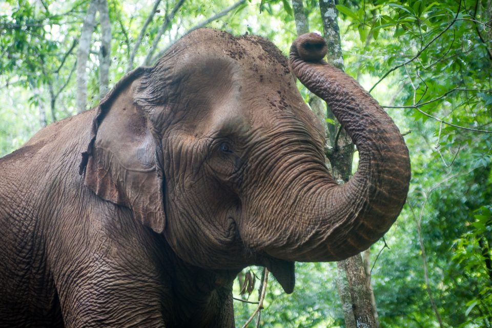 Mondulkiri Project Elephants