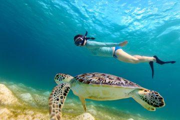 snorkeling underwater asia turtle
