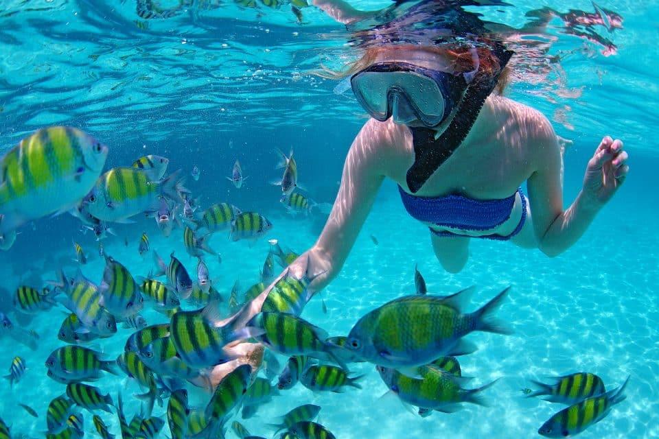 snorkeling beginners guide