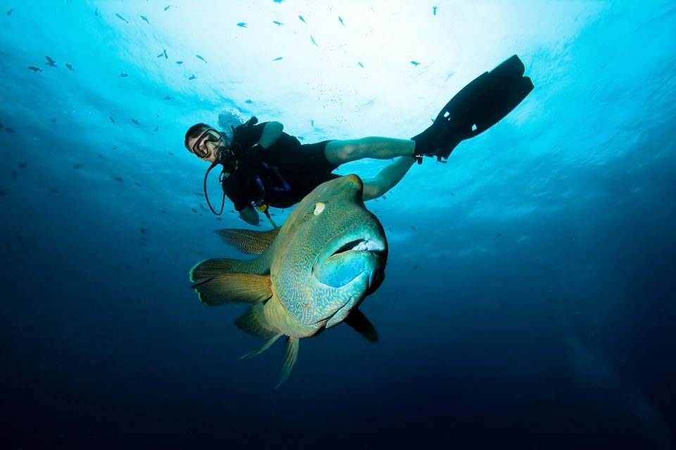 snorkeling andaman sea