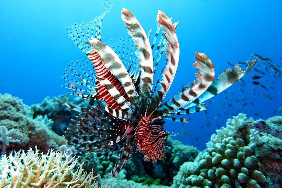 kerama snorkeling diving