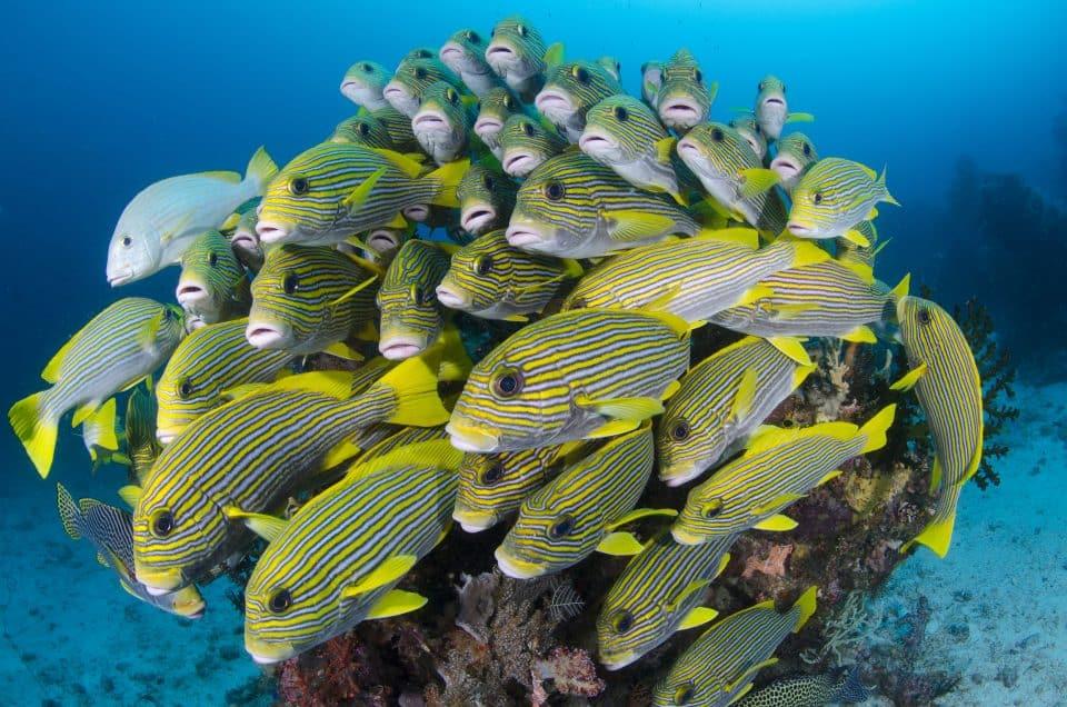 school of fish raja ampat