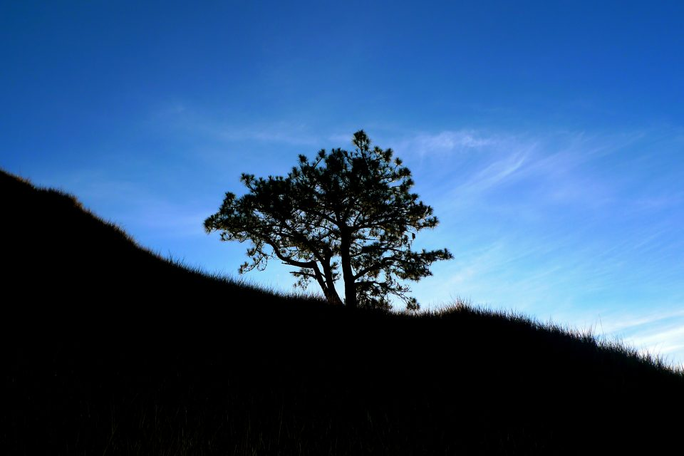 A silhouette of a tree on the mountain