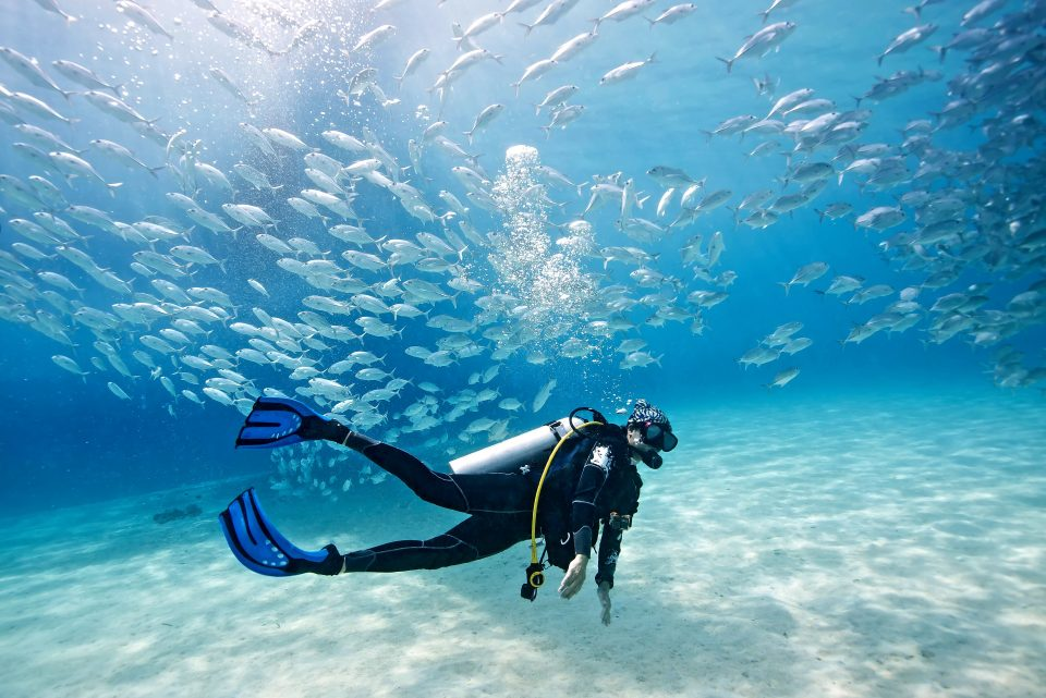 A diver with a school of fish