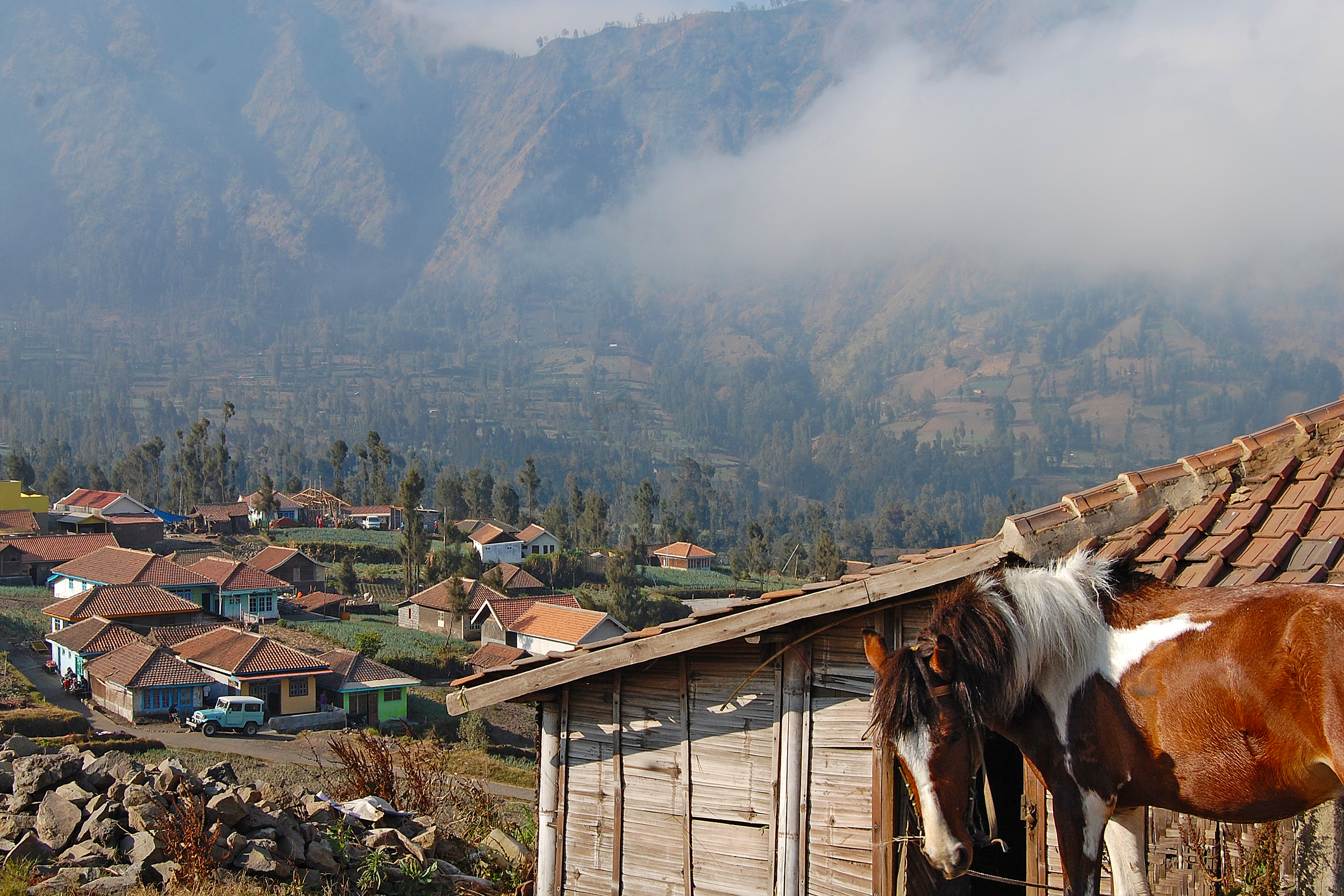 A horse among houses in the mountains