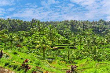 ubud-where-to-stay