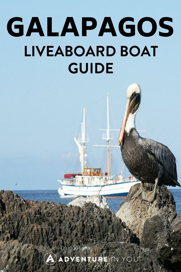 Galapagos Island | Planning a liveaboard trip? Click here to see our Galapagos Diving boat reviews and more. #galapagos