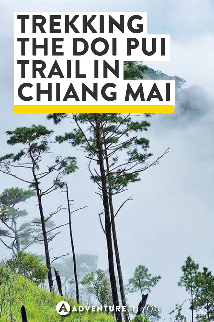 Chiang Mai Thailand | Planing a trip to Thailand? Consider Trekking the Doi Pui Nature Trail in the Doi Suthep Pui National Park