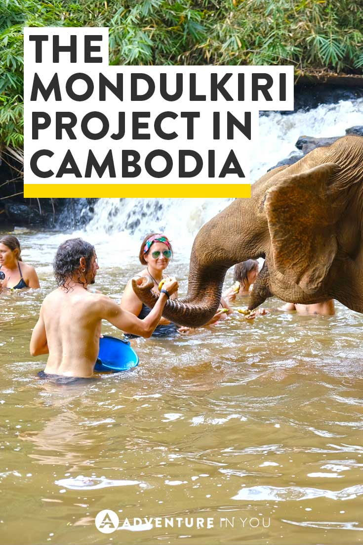 Cambodia Elephants | Looking for a fun adventure to do while in Cambodia? Check out the Mondulkiri Project Jungle Experience and interact with elephants in a safe environment.