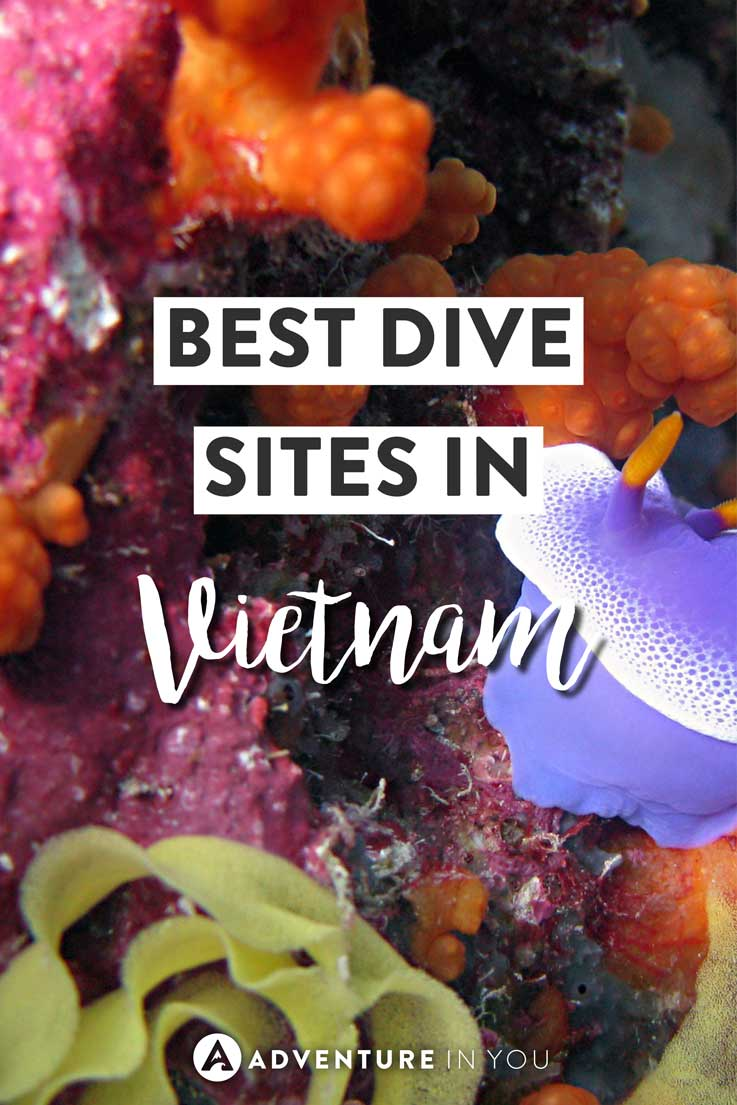 Vietnam Diving | Looking for the best dive sites to explore while in Vietnam? Here are our top picks for the best dive sites in Vietnam