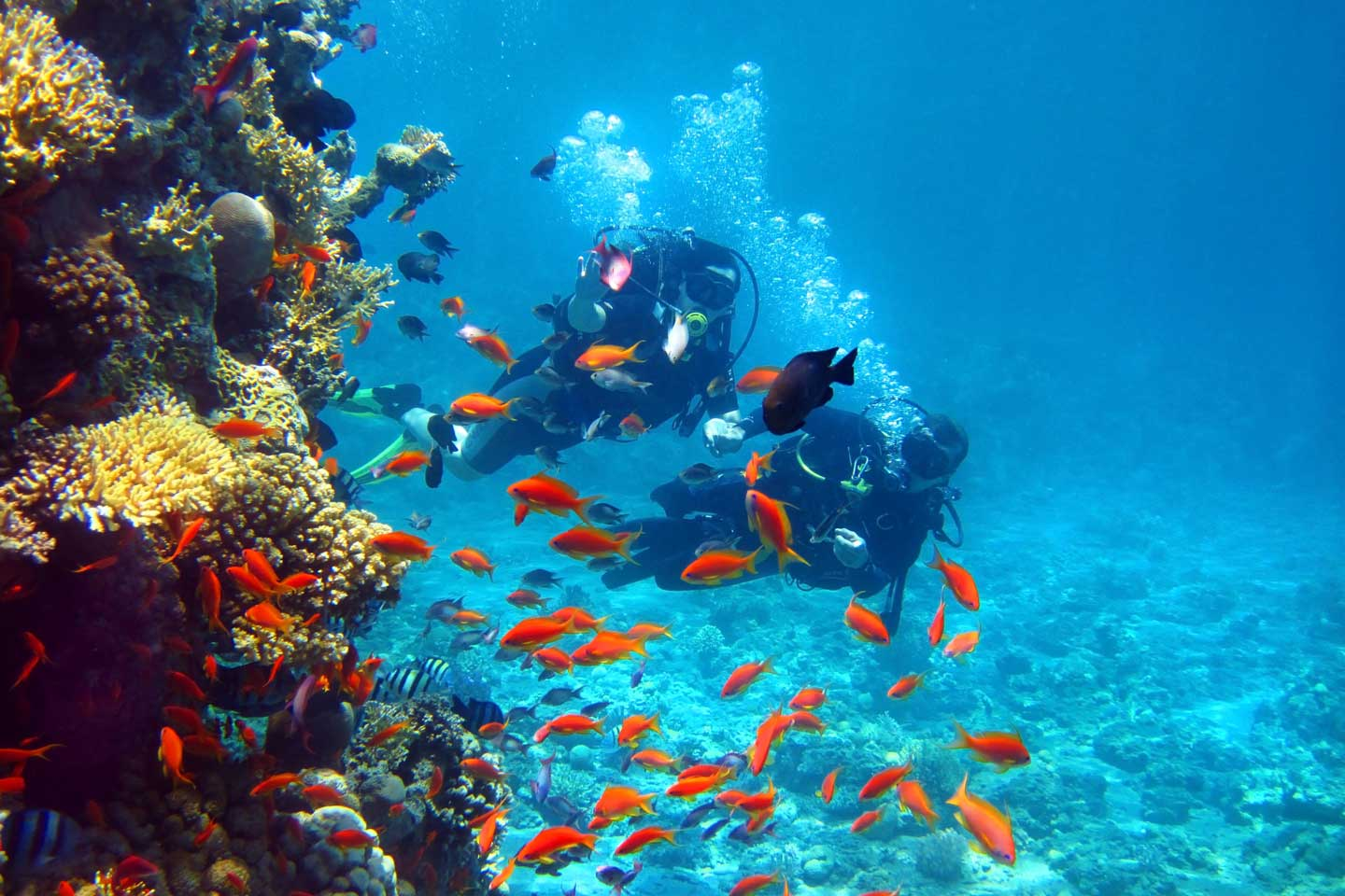 Image result for Diving – Explore The World Underneath Sihanoukville