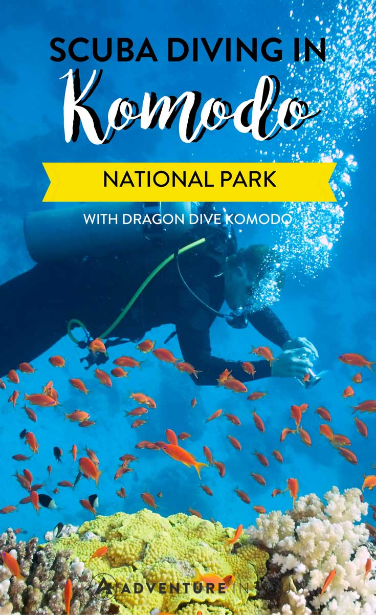Komodo National Park | Looking to try scuba diving while in Komodo? Here is our full diving experience with Dragon Dive Komodo