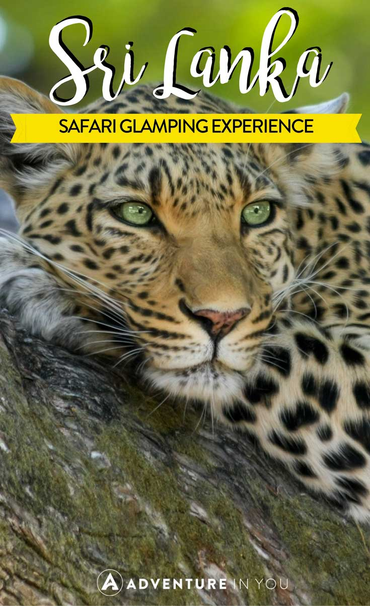 Sri Lanka   Looking for Sri Lanka safaris to go on? Read up about our experience in Wilppatu National Park when we worked with Leopard Trails on a once in a lifetime experience.