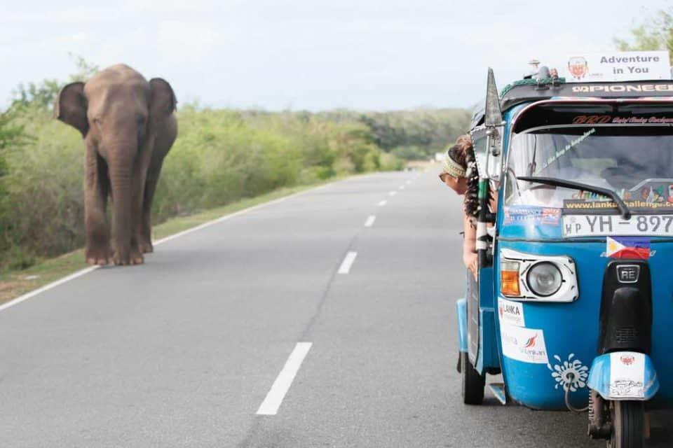 Lanka challenge elephants