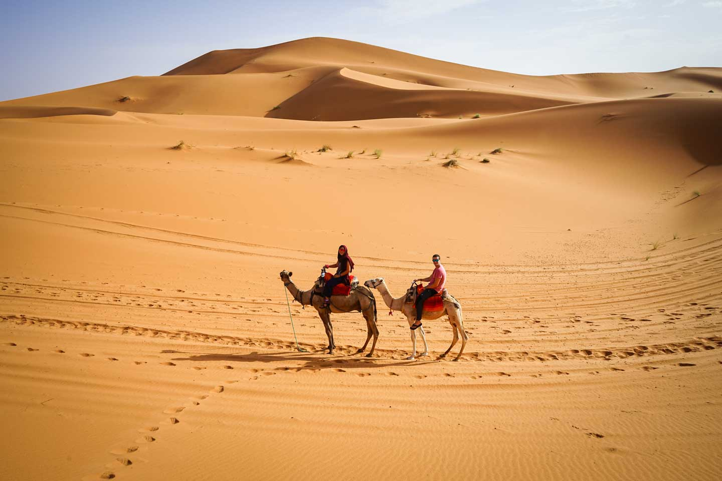 camels-morocco