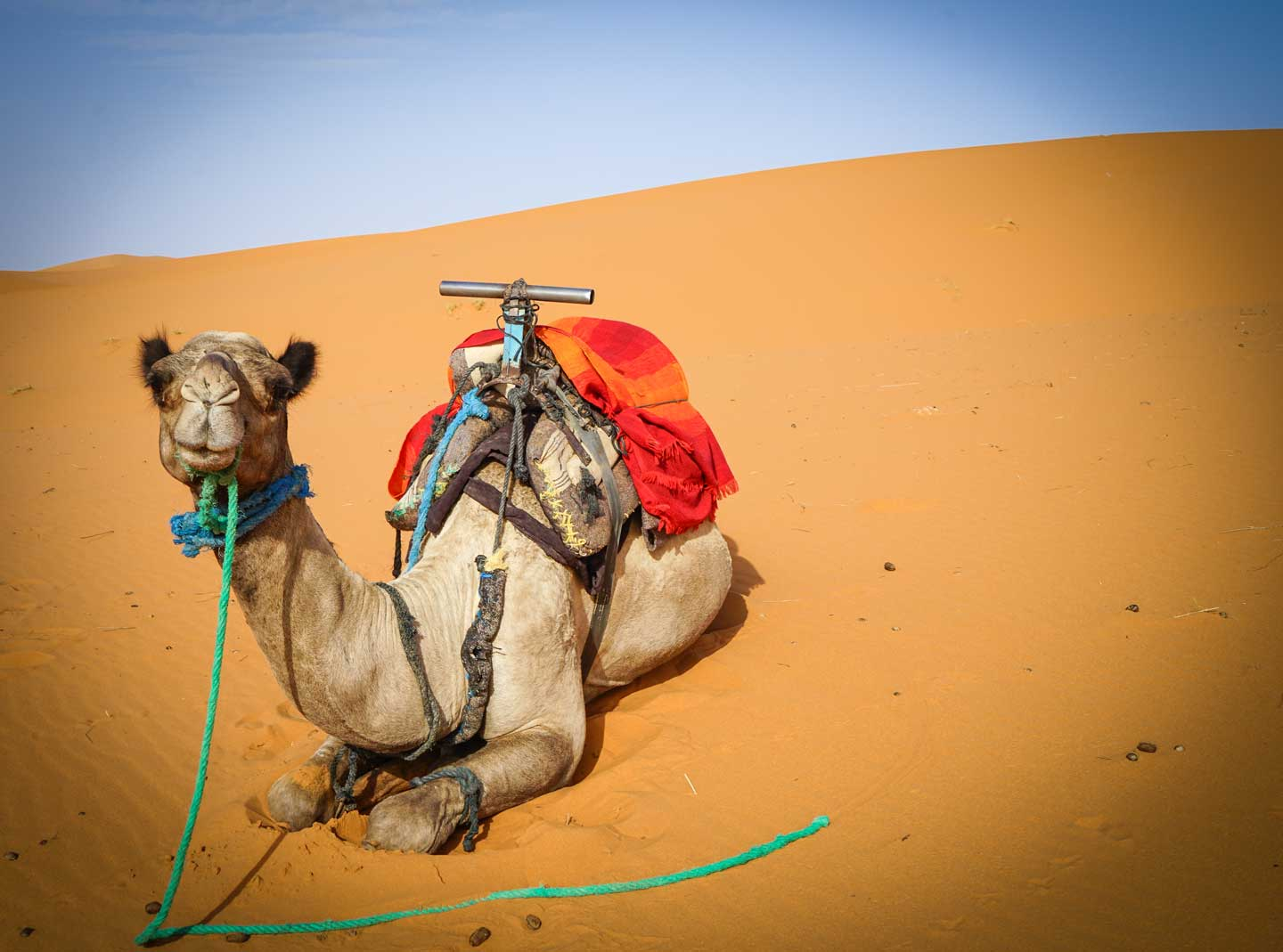 marrakesh-camel-trek