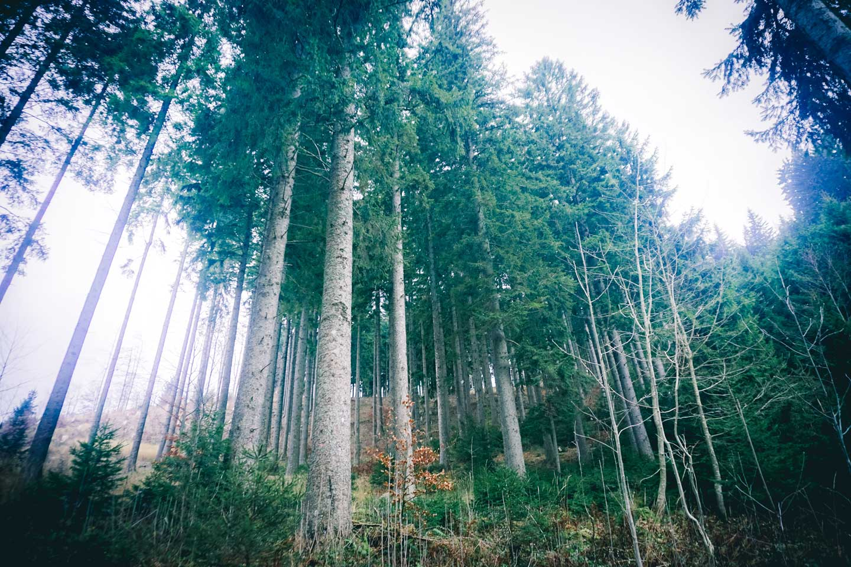 osprey-woods
