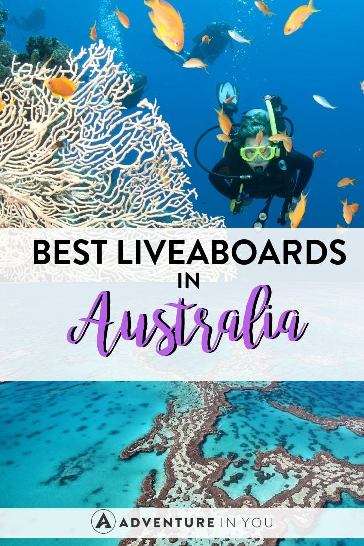 Australia Diving | Want to go diving in Australia? Check out the best liveaboard boats for the ultimate diving experience #australia #liveaboard #scubadiving