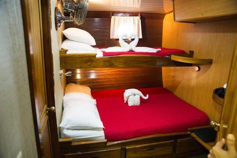 beagle cabin