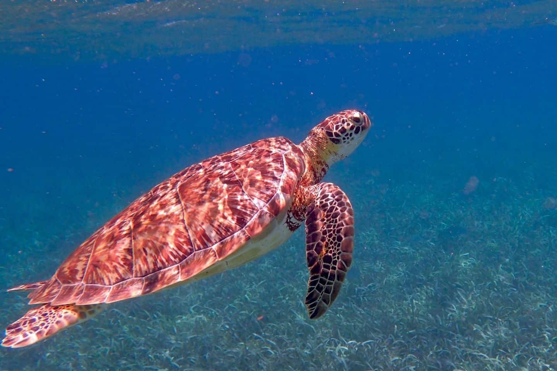 belize-diving