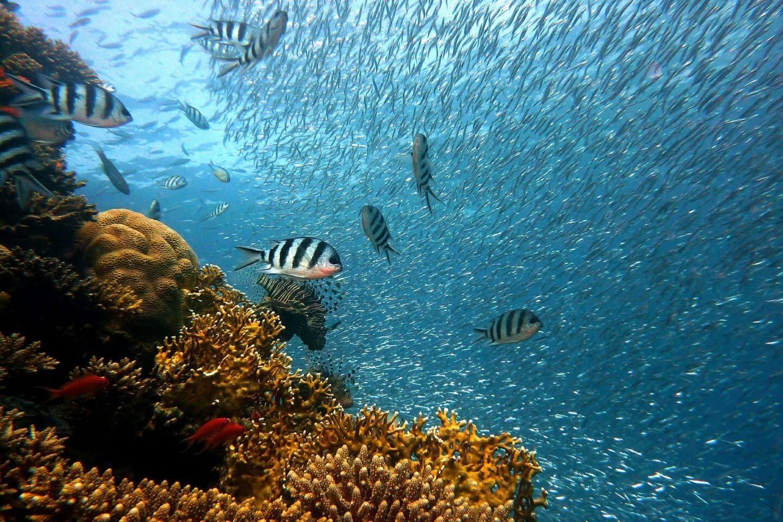 diving-fish-underwater