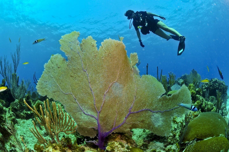 best-diving-sites