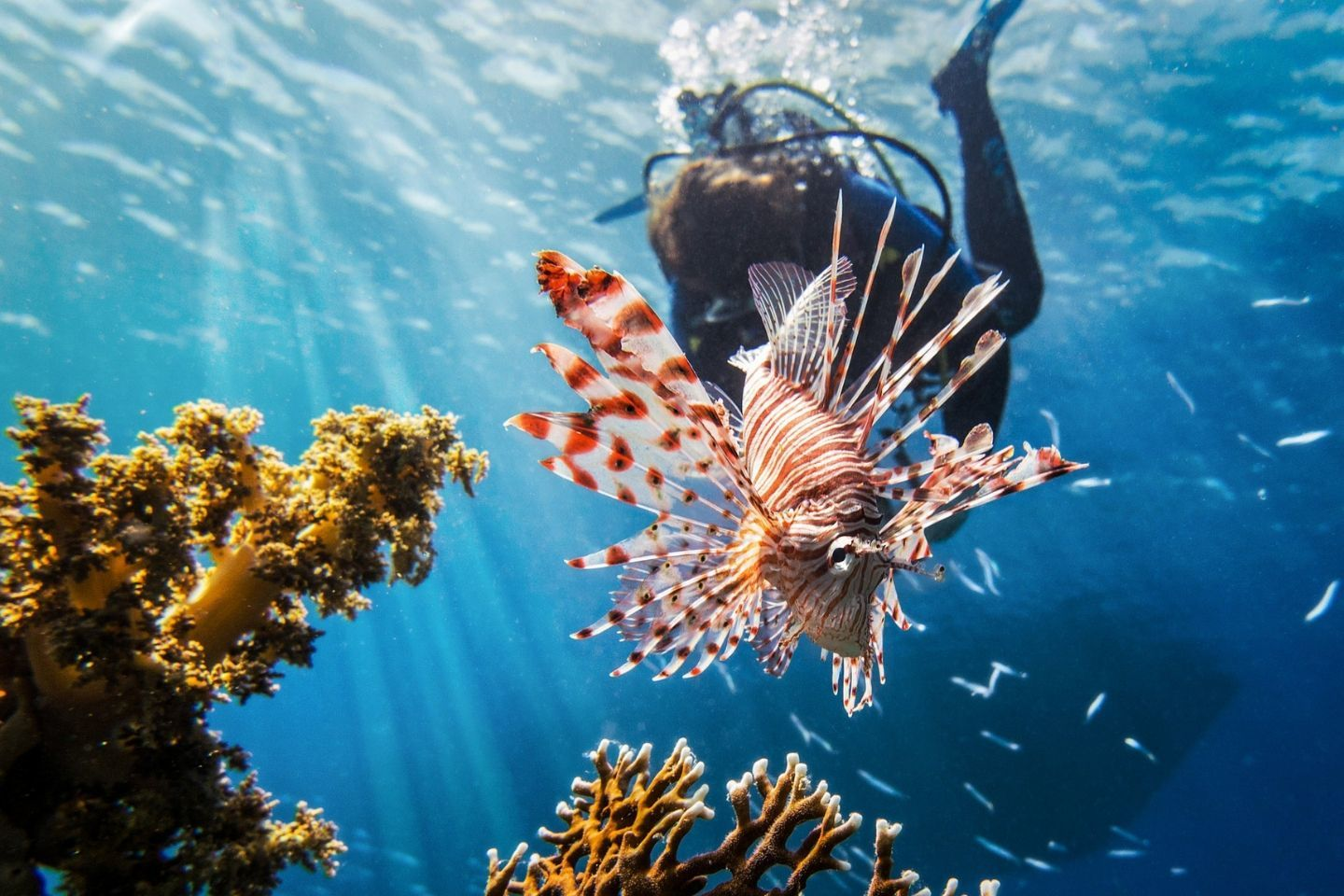 Best Diving In The World: An Indepth Guide For Dive
