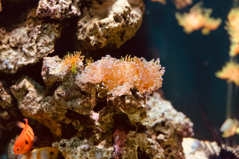 diving-coral