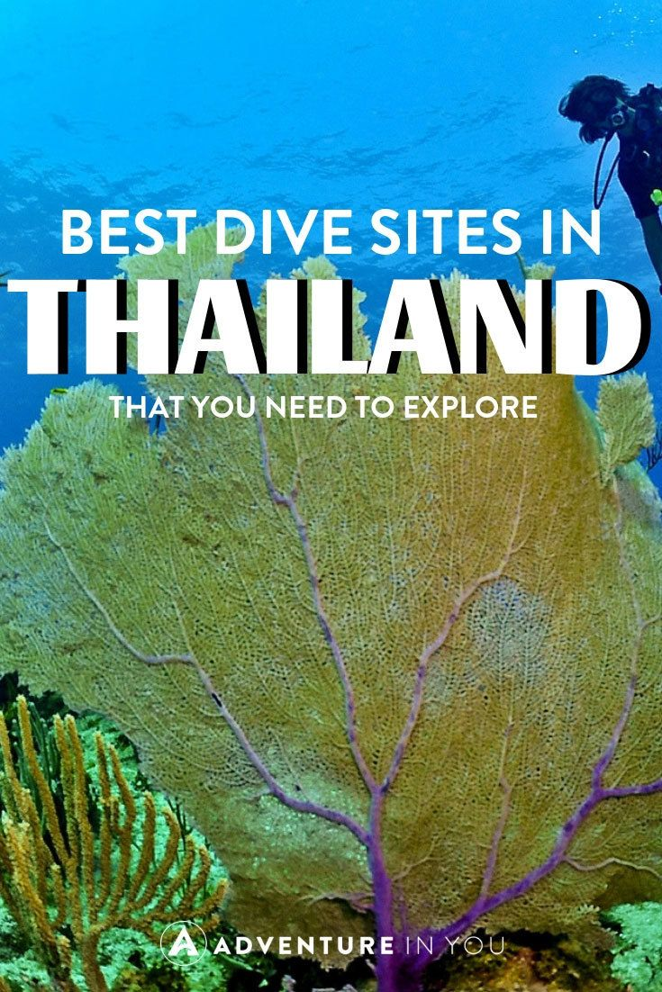Diving in Thailand | Planning on checking out the scuba diving in Thailand? Click here to read our full article on the best dive sites in the country. #thailand #scubadiving