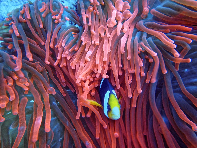 diving-indonesia