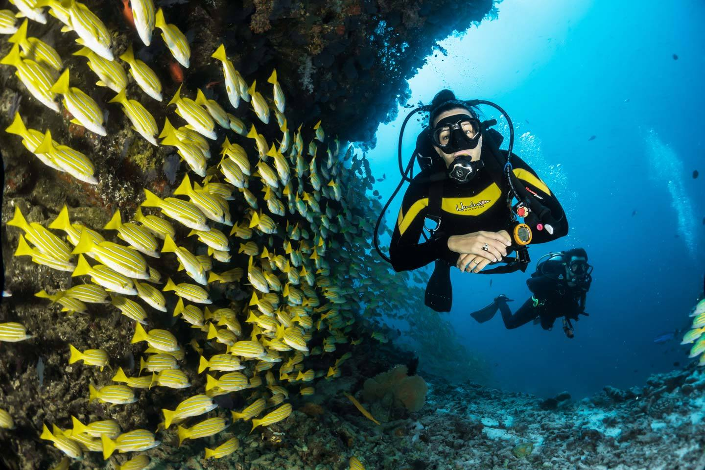 scuba diver with lots of fish