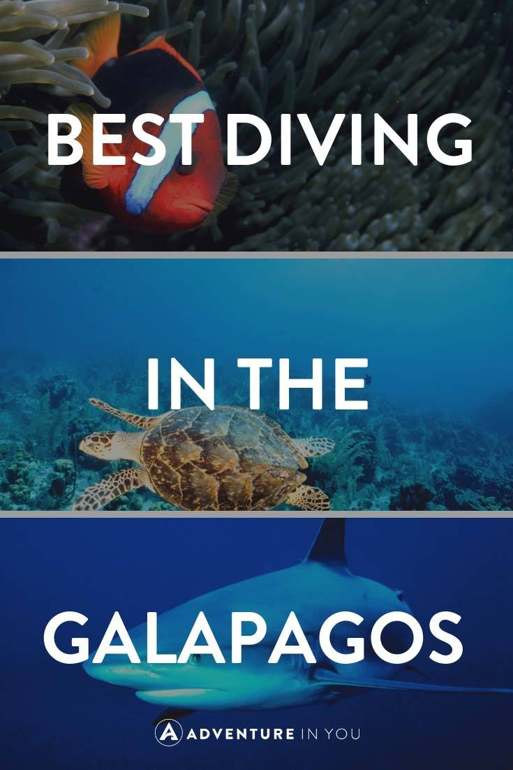 Galapagos Diving | Looking for information on diving in the Galapagos Islands? Check out our full guide featuring best dive sites, when to go, and more. #galapagosislands #galapagos