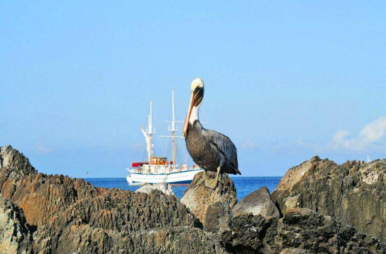 galapagos-liveaboard-boats