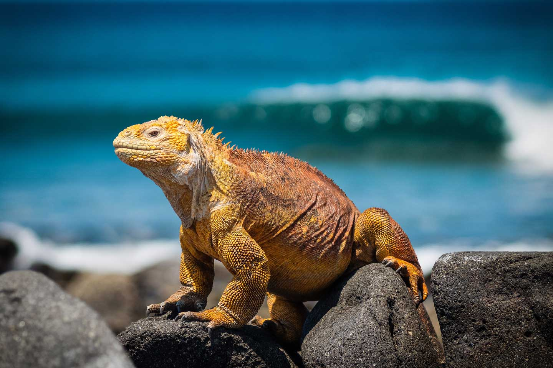 galapagos-liveaboard