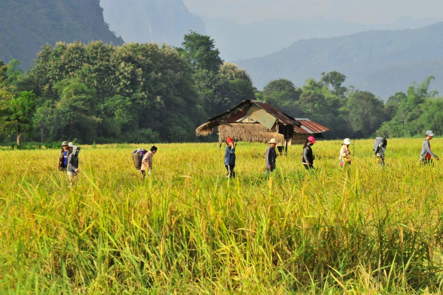 people working in a field farming