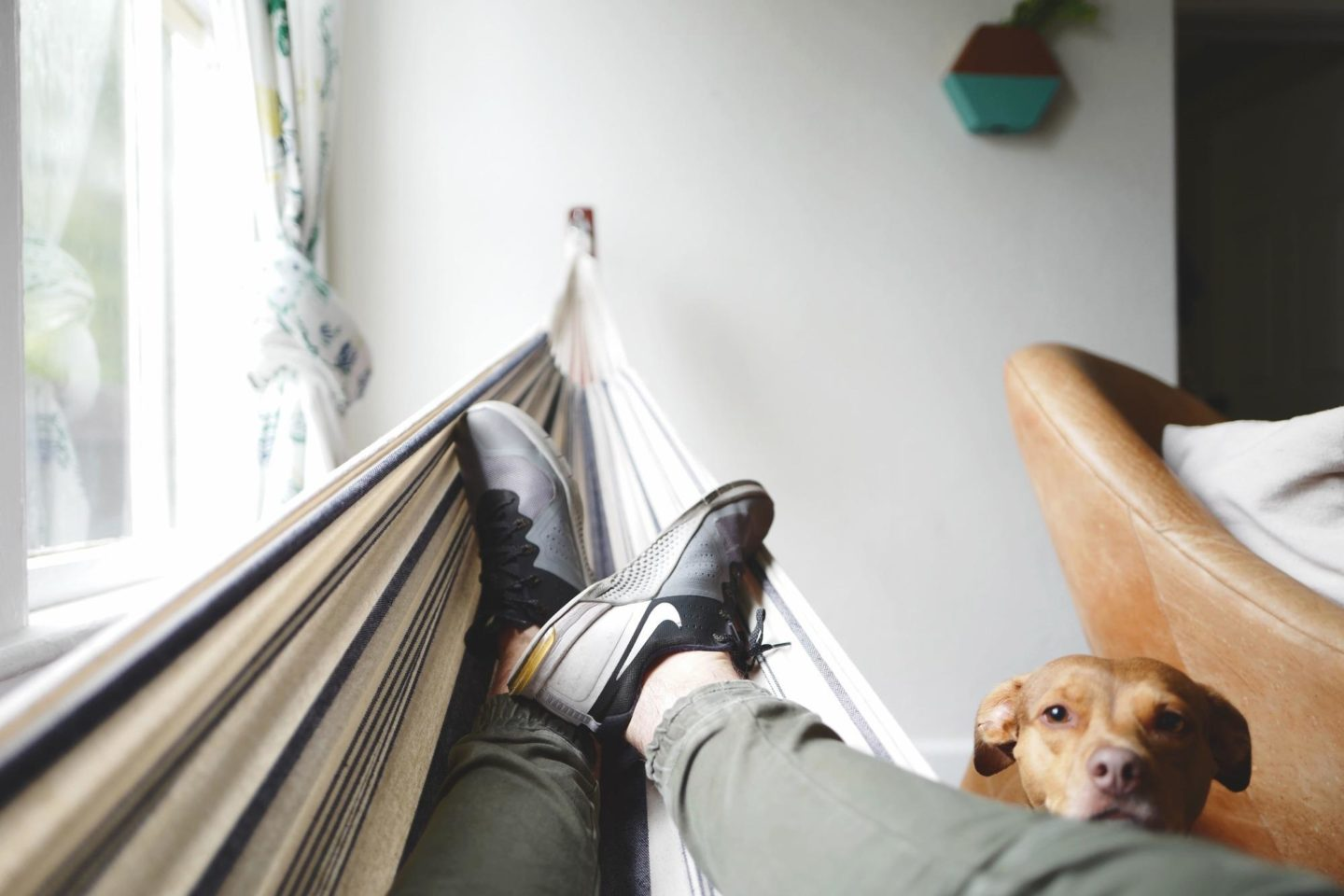 person lying on hammock with dog looking at them