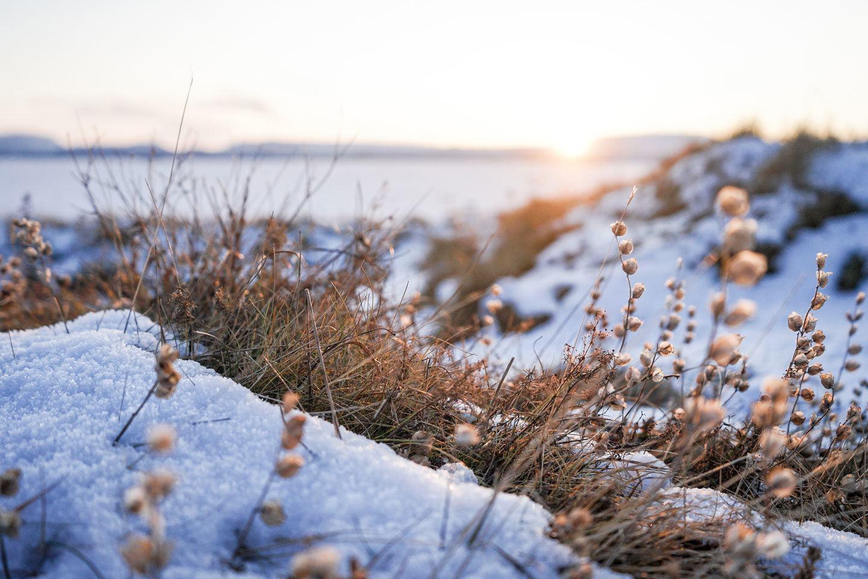 iceland-snow