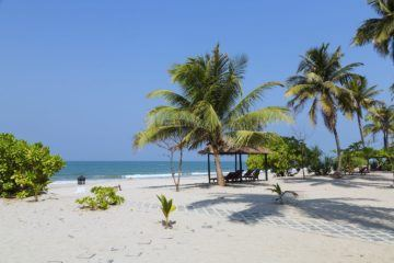 white sand beach with palm trees and ocean