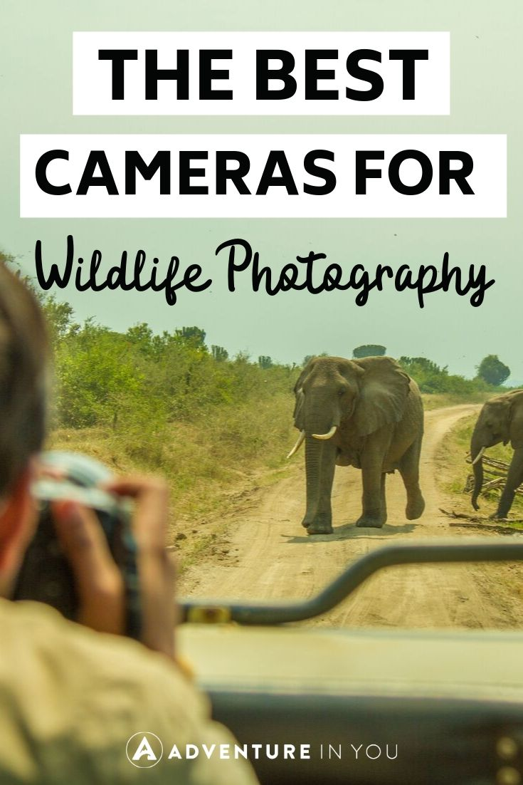 Best Camera for Wildlife Photography | Interested in capturing all the world's vibrant wildlife in photo form? Here are ten of the best cameras to help you do so!