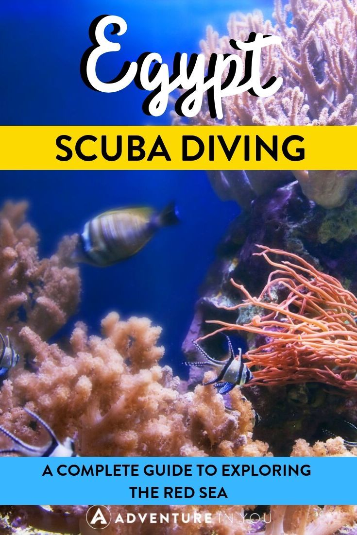 Egypt Scuba Diving | Did you know that the Red Sea has some of the greatest scuba diving in the world? Here's everything you need to know about planning a diving trip in Egypt.